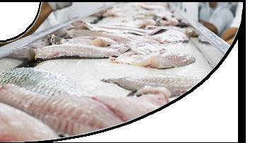 Processamento do Peixe